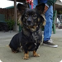 Adopt A Pet :: Ivy - Lathrop, CA