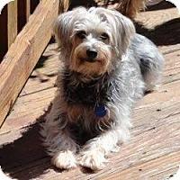 Adopt A Pet :: CHLOE MAE - Suwanee, GA