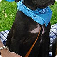 Adopt A Pet :: Rokkie mellow easy pup - Sacramento, CA