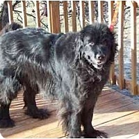 Adopt A Pet :: Nana-Adoption Pending - Lee's Summit, MO