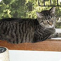 Adopt A Pet :: Cheyenne-IN FOSTER CARE - Milwaukee, WI