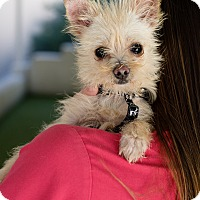 Adopt A Pet :: Kiwi - Mission Viejo, CA