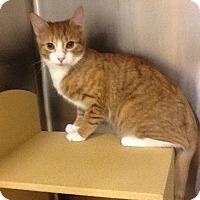 Adopt A Pet :: Casey - Colmar, PA