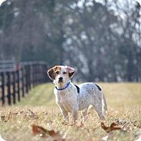 Adopt A Pet :: Harvey - Homewood, AL
