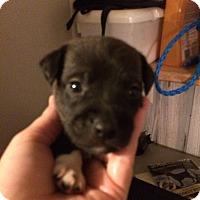Adopt A Pet :: Lance - Homer, NY