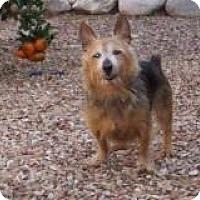 Adopt A Pet :: Mickey - Tucson, AZ
