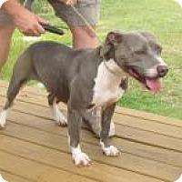 Adopt A Pet :: Libby - Darien, GA