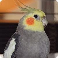 Adopt A Pet :: Timmy - Tampa, FL