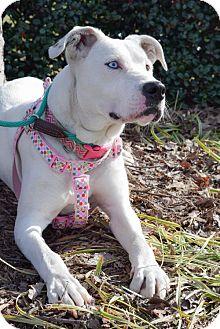 Labrador Retriever Mix Dog for adoption in Dallas, Georgia - Luna