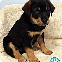 Adopt A Pet :: Justina - Kimberton, PA