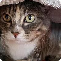 Domestic Longhair Cat for adoption in Salt Lake City, Utah - Mo