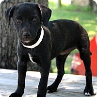 Adopt A Pet :: Leigh Ann~meet me~ - Glastonbury, CT