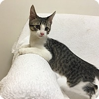 Adopt A Pet :: Monroe - Mission Viejo, CA