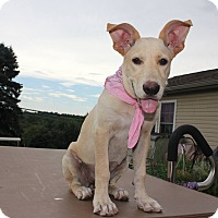 Adopt A Pet :: Susie - New Oxford, PA