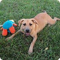 Adopt A Pet :: Jenger - Mount Ida, AR