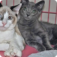 Adopt A Pet :: Clarence & Bayley  8 mos & 4 mos - Princeton, MA