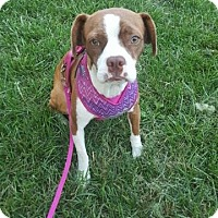 Adopt A Pet :: Reba - Indianapolis, IN