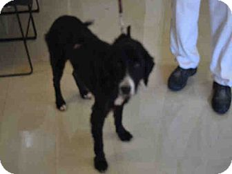 Border Collie Mix Dog for adoption in Newnan City, Georgia - Clipper
