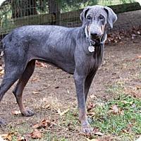 Adopt A Pet :: WILLA - Greensboro, NC