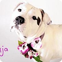 Adopt A Pet :: *AJA - Sacramento, CA