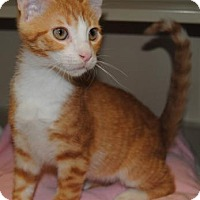 Adopt A Pet :: Remy - Ridgeland, SC