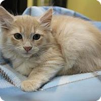 Adopt A Pet :: Blake - Benbrook, TX