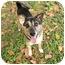 Photo 4 - Australian Cattle Dog/Shepherd (Unknown Type) Mix Dog for adoption in Key Biscayne, Florida - Pal