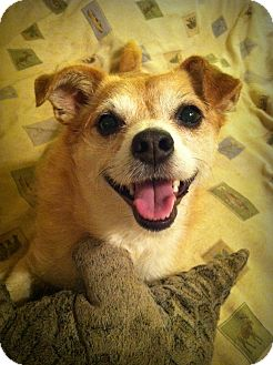 Chihuahua/Terrier (Unknown Type, Small) Mix Dog for adoption in Greenville, South Carolina - Lottie