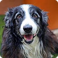 Adopt A Pet :: Walter - Tempe, AZ