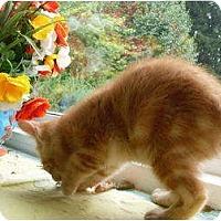 Adopt A Pet :: Brody - Kirkwood, DE