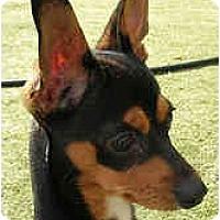 Adopt A Pet :: Dooley O'Doul - San Francisco, CA