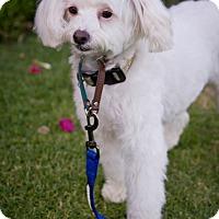 Adopt A Pet :: Harper - Orange, CA