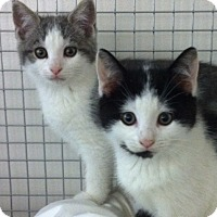Adopt A Pet :: Alfalfa and Darla - Trevose, PA