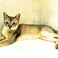 Adopt A Pet :: Raffles - Davis, CA