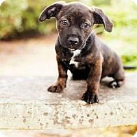 Adopt A Pet :: Augusta (Aggie) - Peachtree City, GA