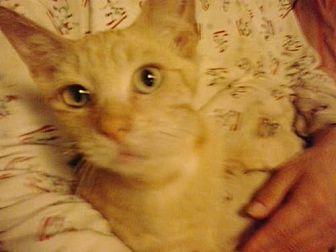 Domestic Shorthair Cat for adoption in Redding, California - 6 boys