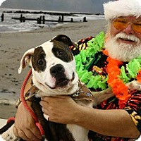 Adopt A Pet :: Rusty - Cochran, GA