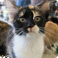 Adopt A Pet :: Beatrice - Merrifield, VA
