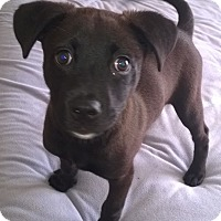 Adopt A Pet :: Julianna - Orlando, FL