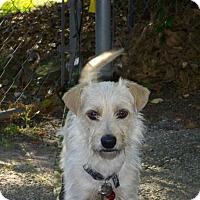 Adopt A Pet :: Harry - Houston, TX