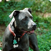 Adopt A Pet :: Theo - Lawrenceville, GA