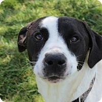 Adopt A Pet :: MOO ! - Harmony, Glocester, RI