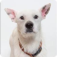 Adopt A Pet :: Spalding - San Luis Obispo, CA