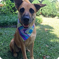 Adopt A Pet :: Sweet Pea (RBF) - Hagerstown, MD