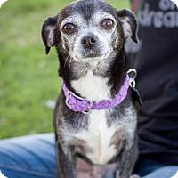 Adopt A Pet :: Pippa - Tucson, AZ
