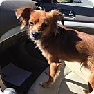 Adopt A Pet :: PAULI