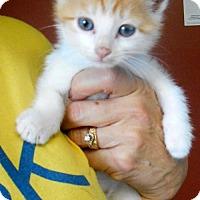 Adopt A Pet :: Patches - Oskaloosa, IA