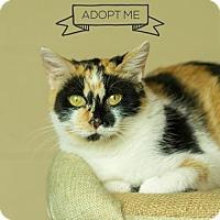 Adopt A Pet :: Salle - Columbia, IL