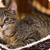 Adopt A Pet :: A..  Freddy - Mooresville, NC
