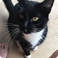 Adopt A Pet :: Squeaky Nibbles - Huntsville, AL